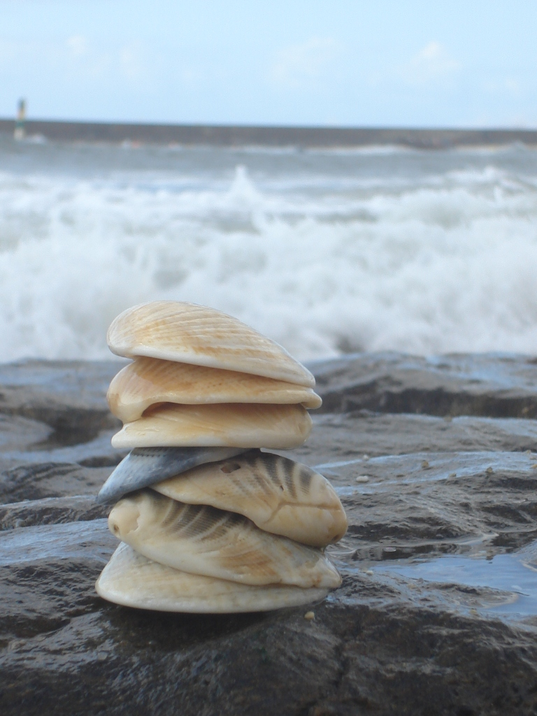 Found these and got wet while taking the picture... small shells stacked on top of each other against the big sea!